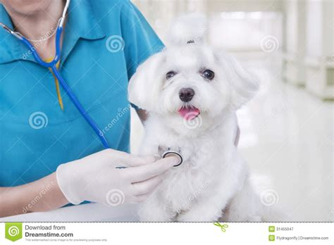 Vet with dog stock image