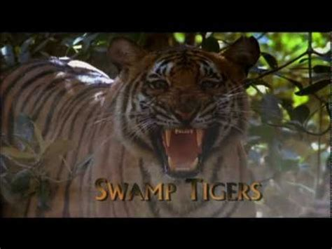 Swamp Tigers from Sundarbans, Part 1/6 - YouTube