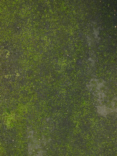 Free Green Nature Ground Texture Photo Gallery