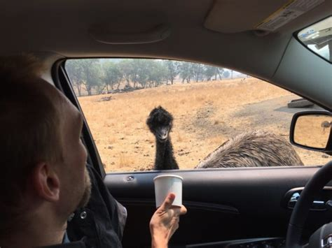The Thrilling Wildlife Safari In Oregon Where You Can See