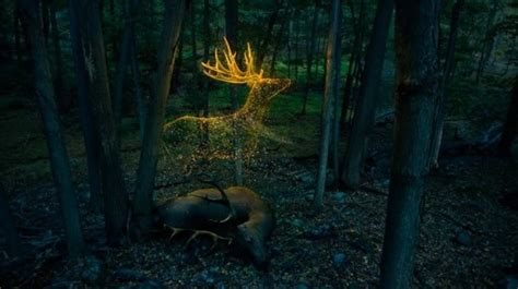 Ghost Deer | Cryptid Wiki | FANDOM powered by Wikia