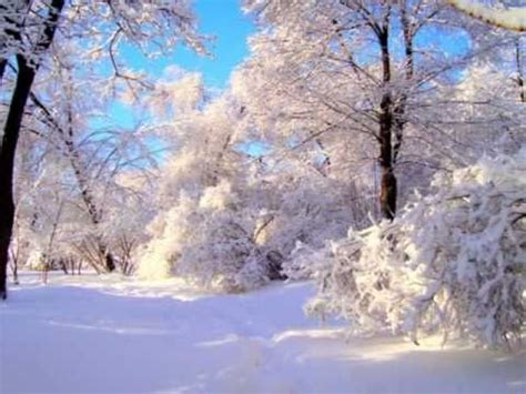 Russian Winter Forest/ P
